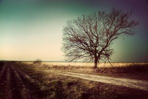 The tree by ChristineAmat