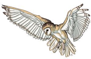 Barn Owl by ProdigyDuck
