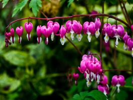 Bleeding Hearts by brpestilence