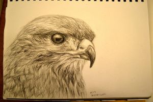 Charcoal sketch: Bird by ashlin422