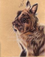 Wacek the rabbit by Marcysiabush