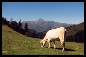 Grazing cow... by LeMarquis