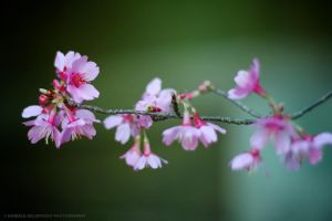 Spring Pastels by dandelgrosso