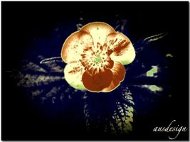 Buttercup... by ansdesign