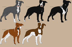 American Pitbull Terrier Imports by RoyalFront