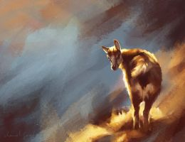 Chamois by manitwo