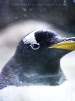 Penguin Portrait by Schnitzelyne