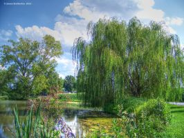 Willow Beside The Lake by jim88bro