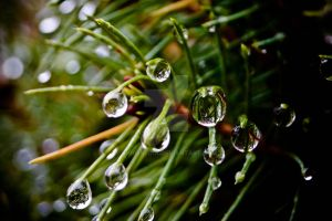 drops by chrisstina