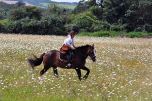 Riding in the meadow by aragornsgirl333