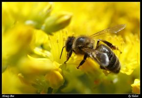 Honey Bee by talsei