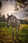 Nature and horse by tomsumartin