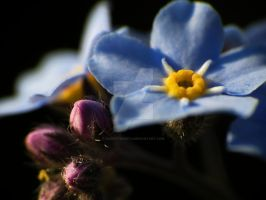 Forget-Me-Nots 2 by zaphotonista