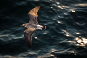 Sea-gull by WETkitchen