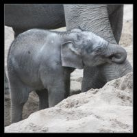 Little Elephant3 by Globaludodesign