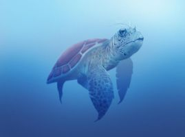 Turtle by NyleLevi