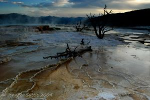 Mammoth Hot Springs 2 by jayshree