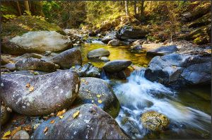 Corn Creek Gold by kootenayphotos
