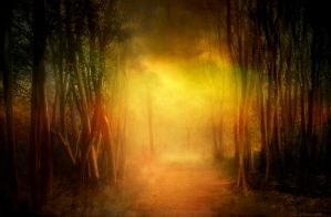 Indefinable Forest Light by JacqChristiaan