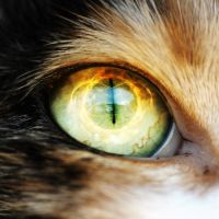 A Cats Eye 2 by TheSpinxSage