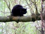 Cat on the tree. 2 by WhiteDevil350