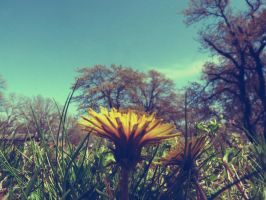 when it blooms by hannahroseison