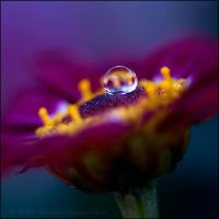 colourful flower drop by dini25