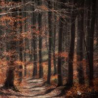 first sunshine by ildiko-neer