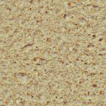 Seamless bread texture by hhh316