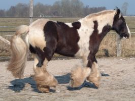 Draft in Action2 by Equine-Resource
