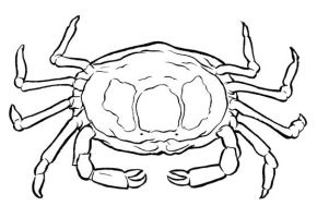 Pea Crab by ColbyBluth