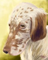 Dog week: My dog Hilu (English setter) by Laichi