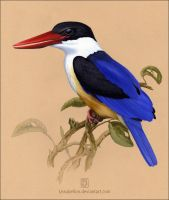 Black-capped Kingfisher by Leaubellon