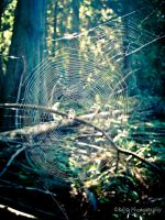 What a Tangled Web it Weaves by Pixiemisa
