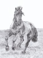 Friesian Horse Sketch by GabrielGrob