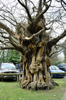 DSC 0267 Gnarled  1 by wintersmagicstock