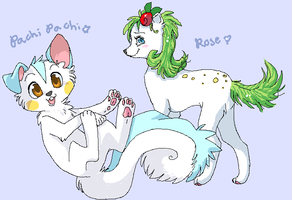 Pachi Pachi + Rose - colour by drill-tail
