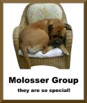 Molosser Group ID by schnuffibossi1