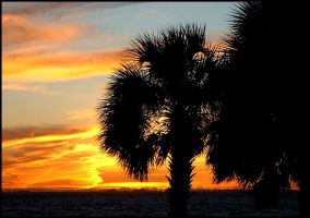 Florida Palm Tree Sunset by effaced