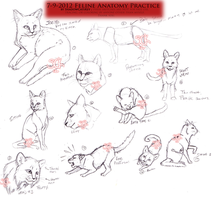 . Feline anatomy study 3 . by ShadowCatsKey