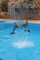 Dolphins 004 by neverFading-stock