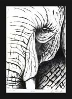 Elephant Litho by emberleo