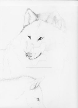 .Wolves-WIP-. by AngelIncarnateSoul