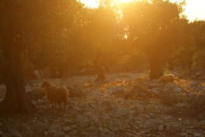 sheep paradise by Her-Redness