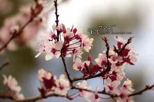 memories of spring by cpg785