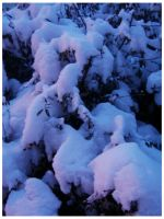 The Colour of Snow II by Lizbeta