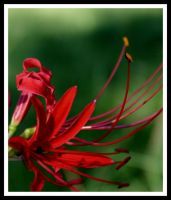 Huricane Lily by lamsquaw