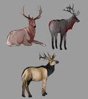 Elk sketches by Allixi