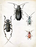 Longhorn Beetles by Heliocyan