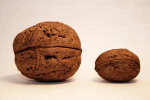 Mr and Mrs  Walnut by DifferentWorld13